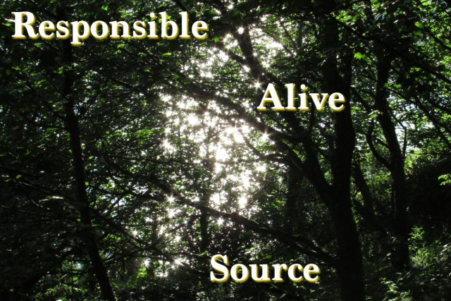 My three words for 2019: responsible – source – alive | robzlog.co.uk